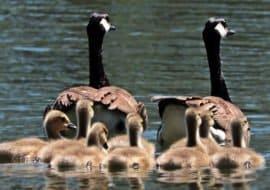 ελληνική οικογένεια